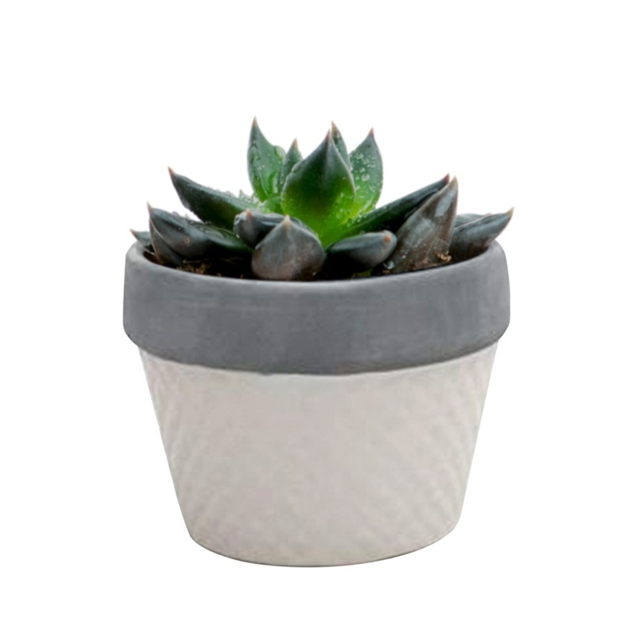 Mini cachepot branco 6cm x 8cm