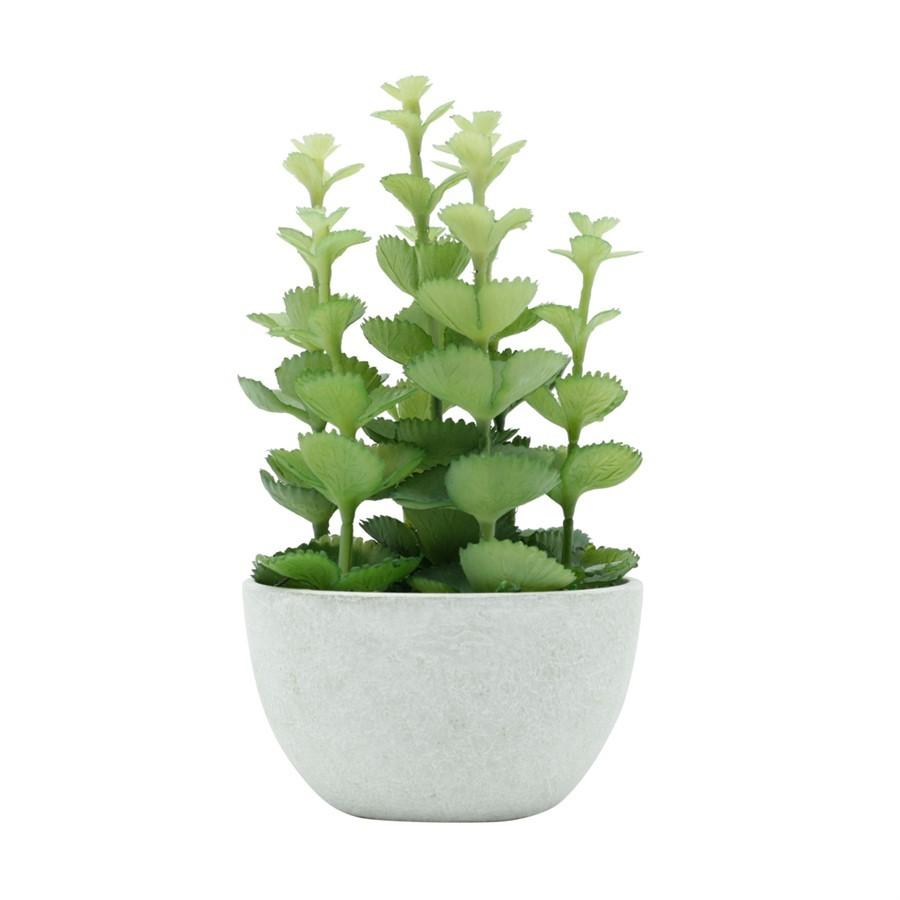 Vaso Plant Crassula Branco 10x18cm
