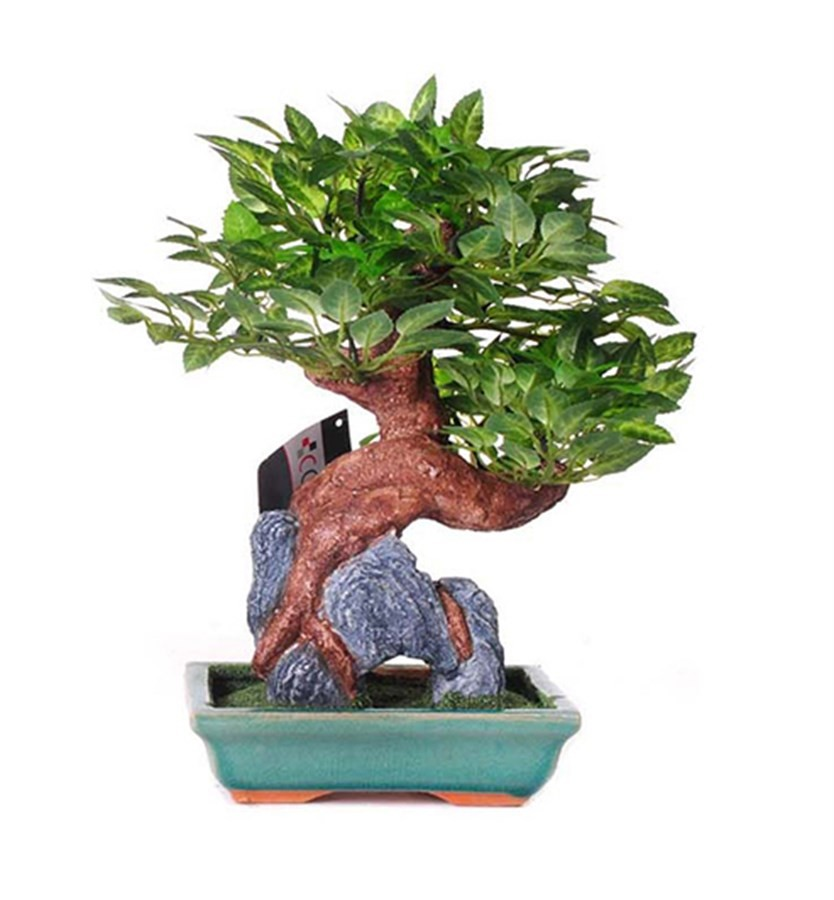 Árvore Decorativa Bonsai 4 sortimentos