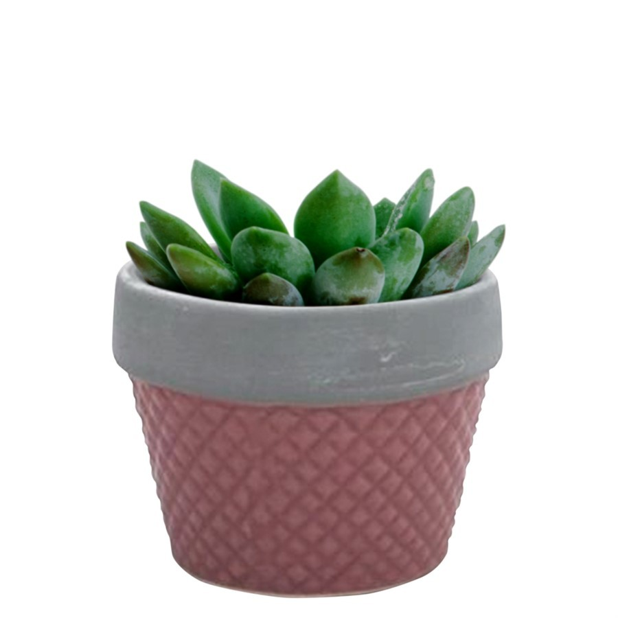 Mini cachepot rosa 6cm x 8cm