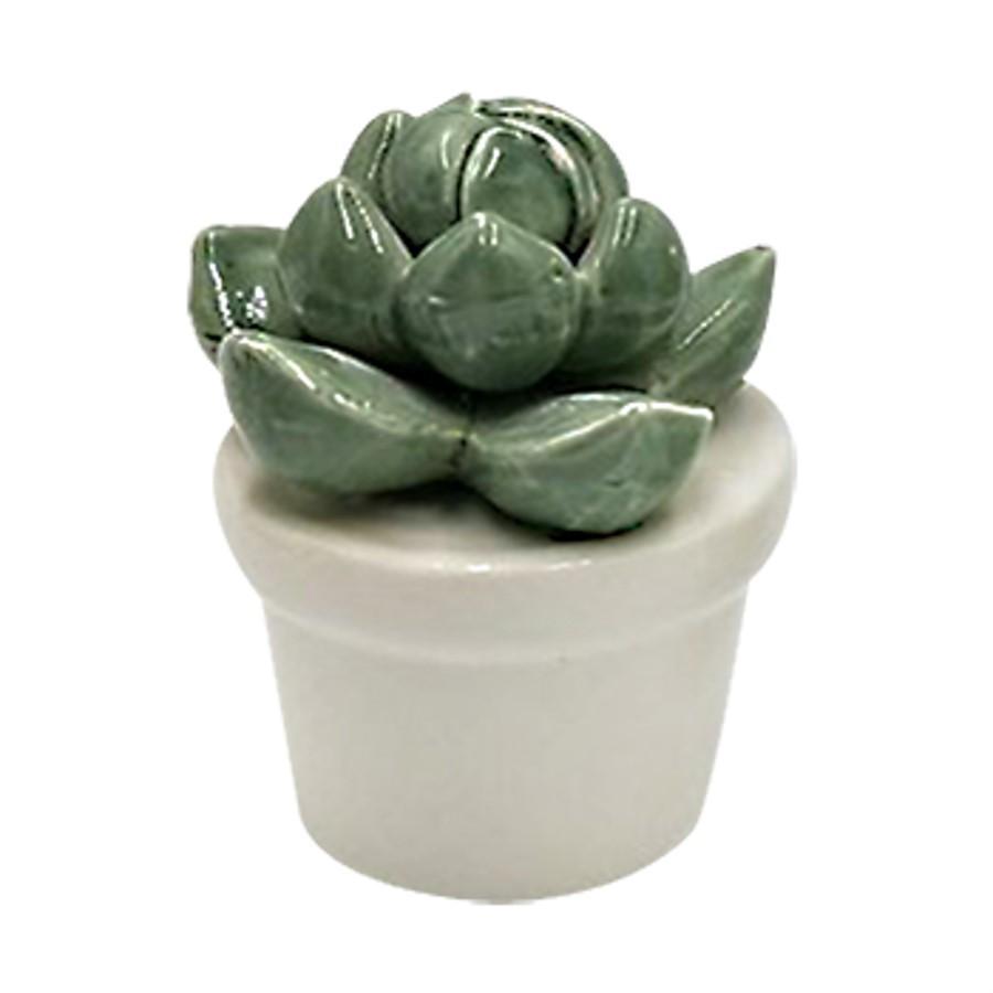 Mini Vaso Suculenta Echeveria