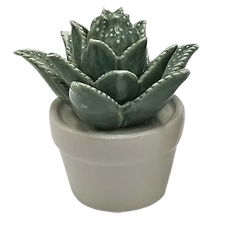 Mini Vaso Suculenta Titubens